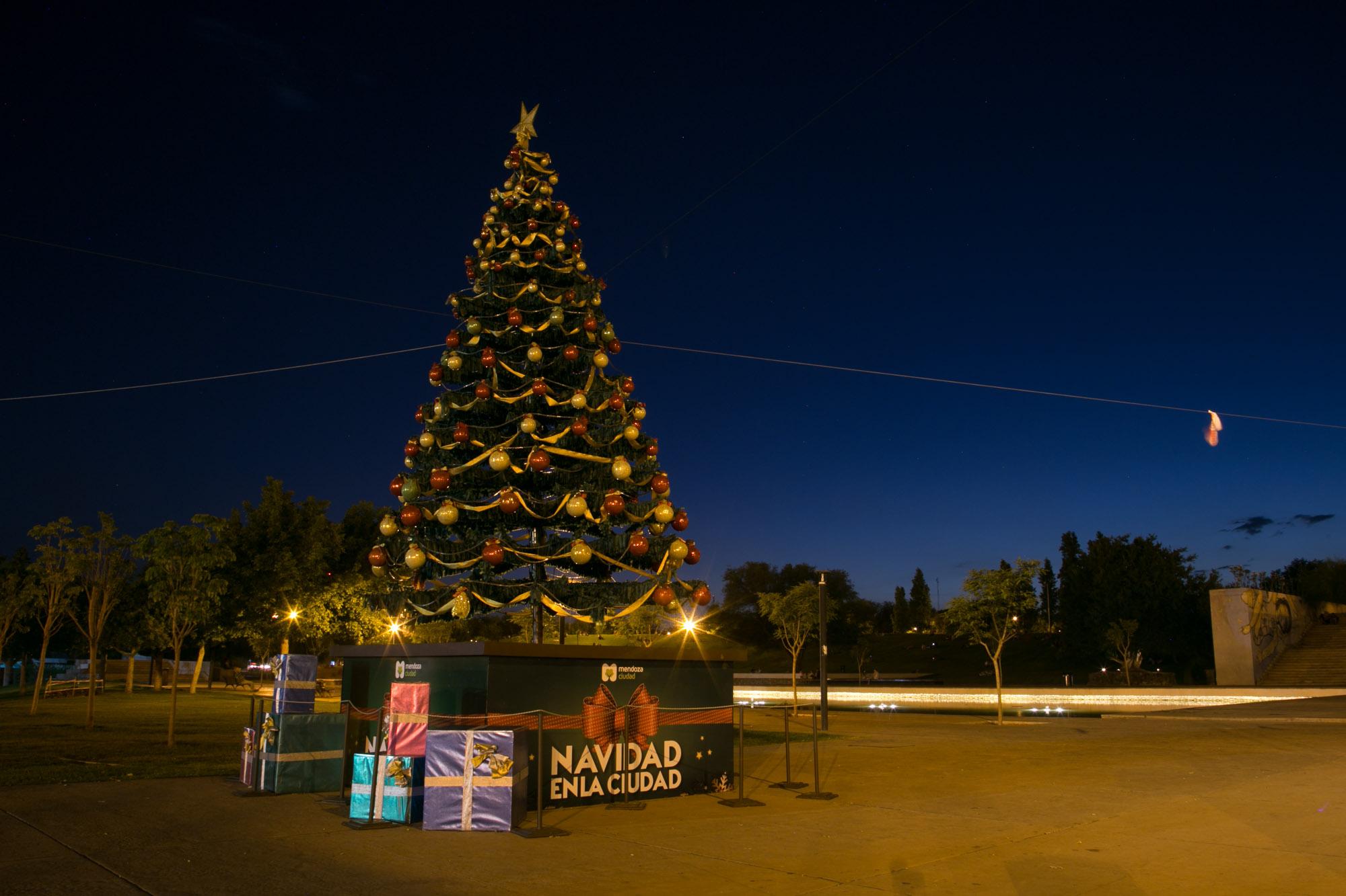 Pino de Navidad. Parque Central