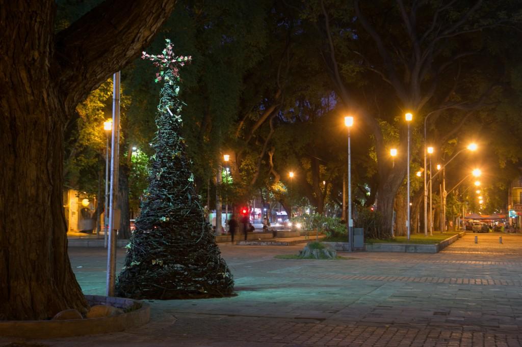 Pino de parras. Portal Alameda