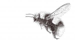 moscaweb